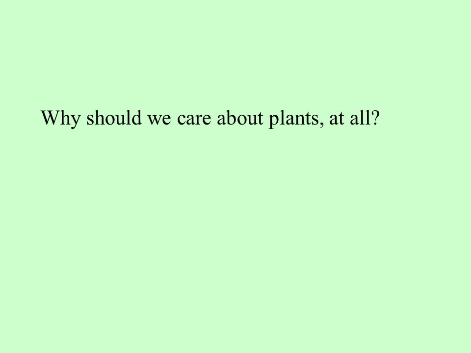 Why should we care about plants, at all