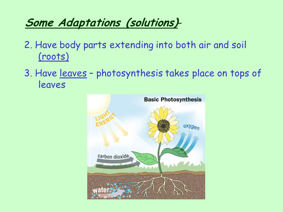 Some Adaptations (solutions)-