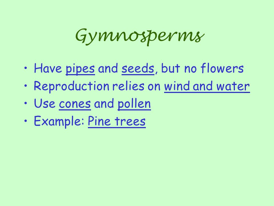Gymnosperms Have pipes and seeds, but no flowers