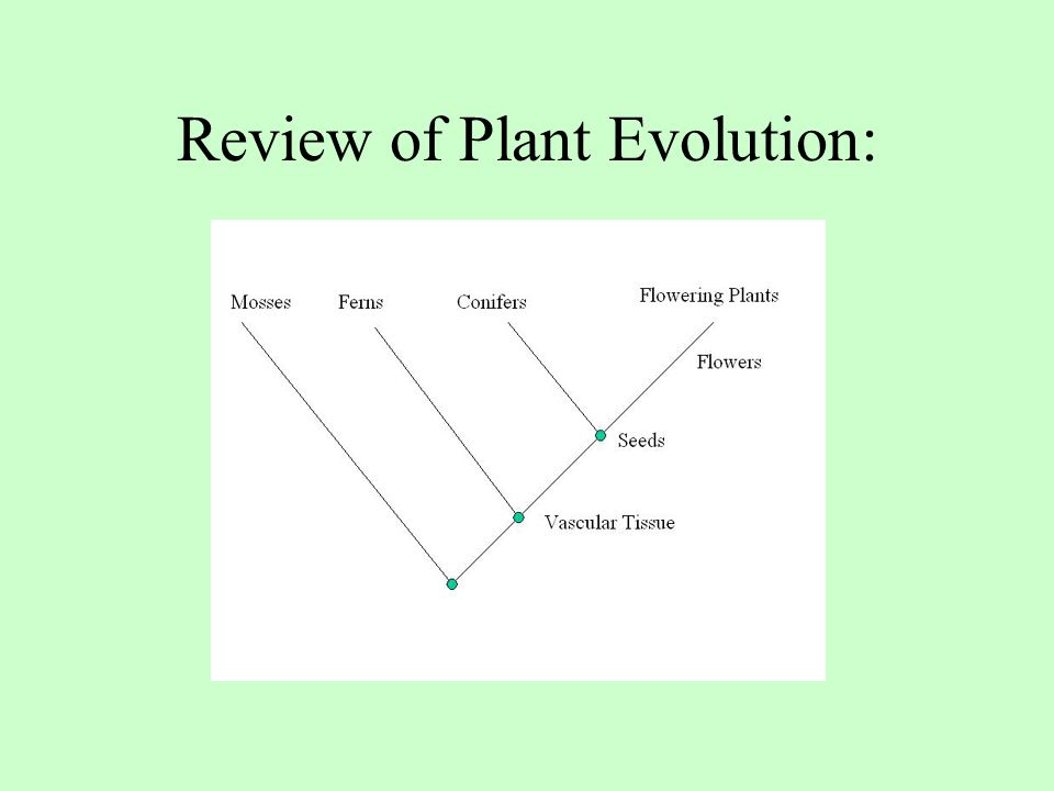 Review of Plant Evolution: