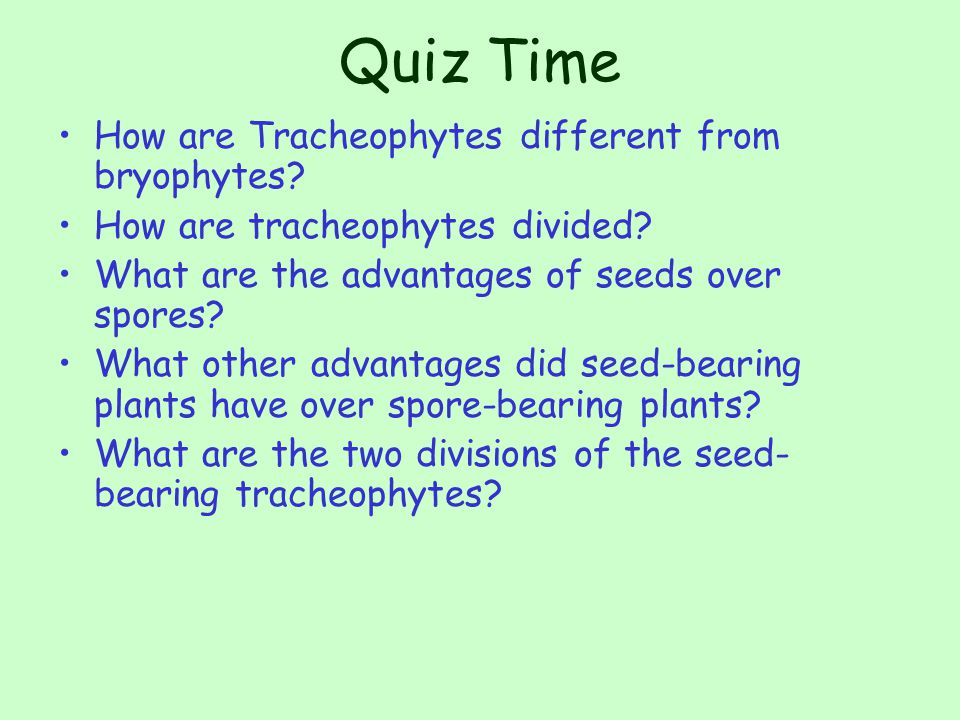 Quiz Time How are Tracheophytes different from bryophytes