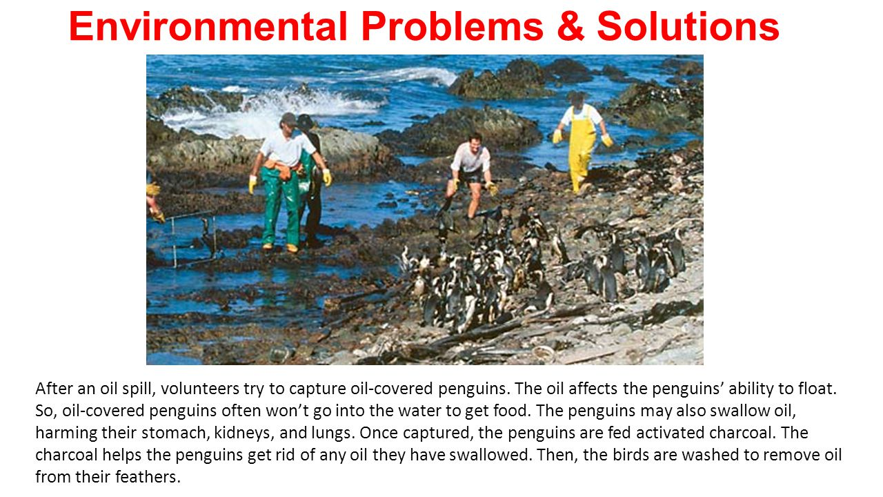what environmental problems does your area Community action and the environment  how often do you think about such environmental issues what do you do to try to address these problems on a day to day.