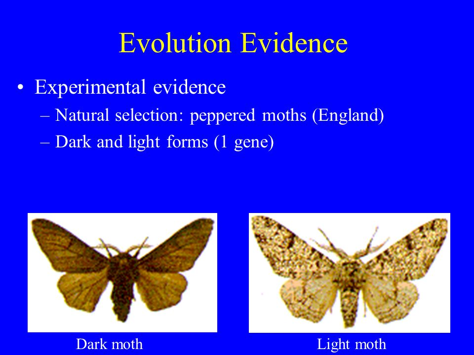 Natural Selection Moths In England