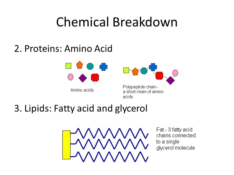 Chemical Breakdown 2. Proteins: Amino Acid 3. Lipids: Fatty acid and glycerol