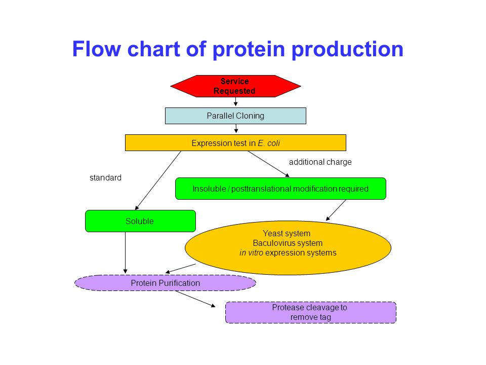Biology Protein Synthesis Test | All Articles about Ketogenic Diet