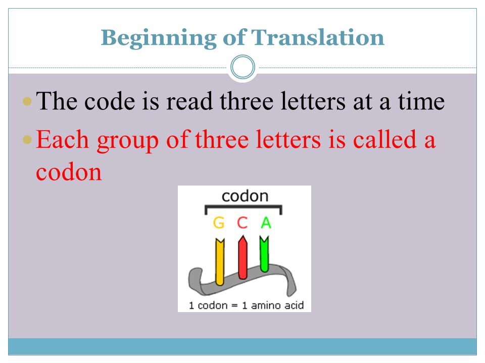 Beginning of Translation