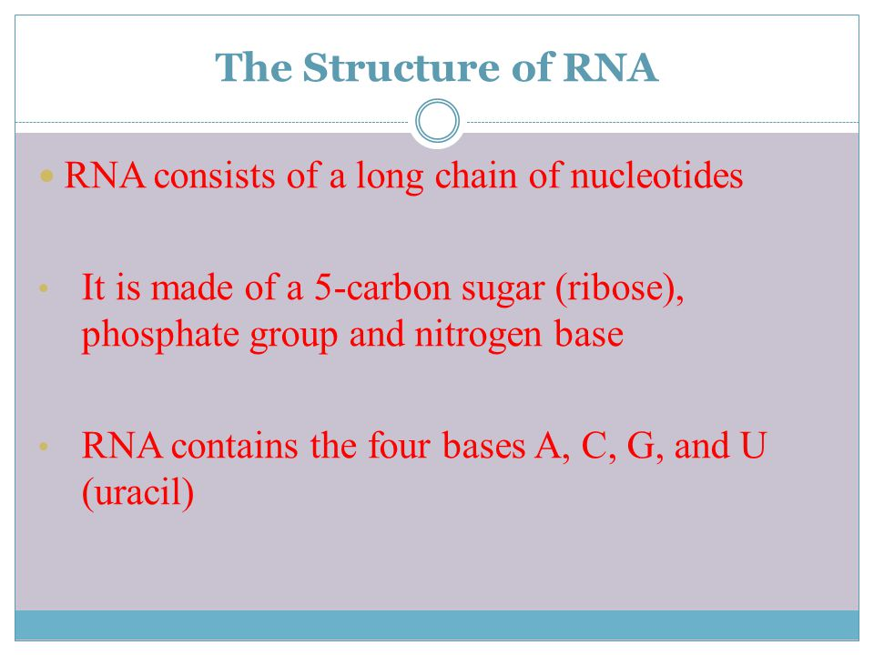 The Structure of RNA RNA consists of a long chain of nucleotides