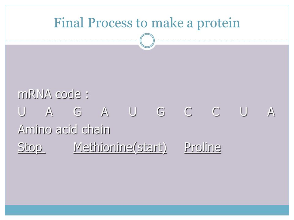 Final Process to make a protein