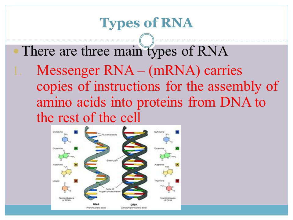 There are three main types of RNA
