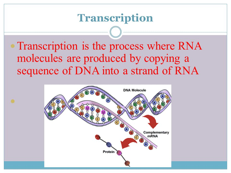 Transcription Transcription is the process where RNA molecules are produced by copying a sequence of DNA into a strand of RNA.