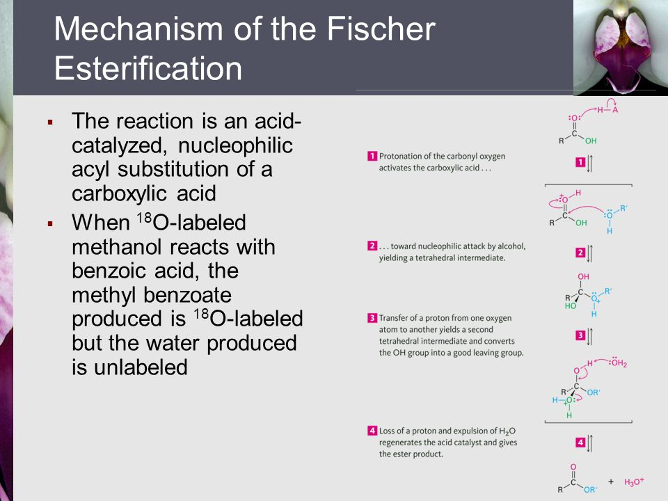 fischer esterification methylbenzoate The classic synthesis is the fischer esterification, which involves treating a carboxylic acid with an alcohol in the presence of a dehydrating methyl benzoate.