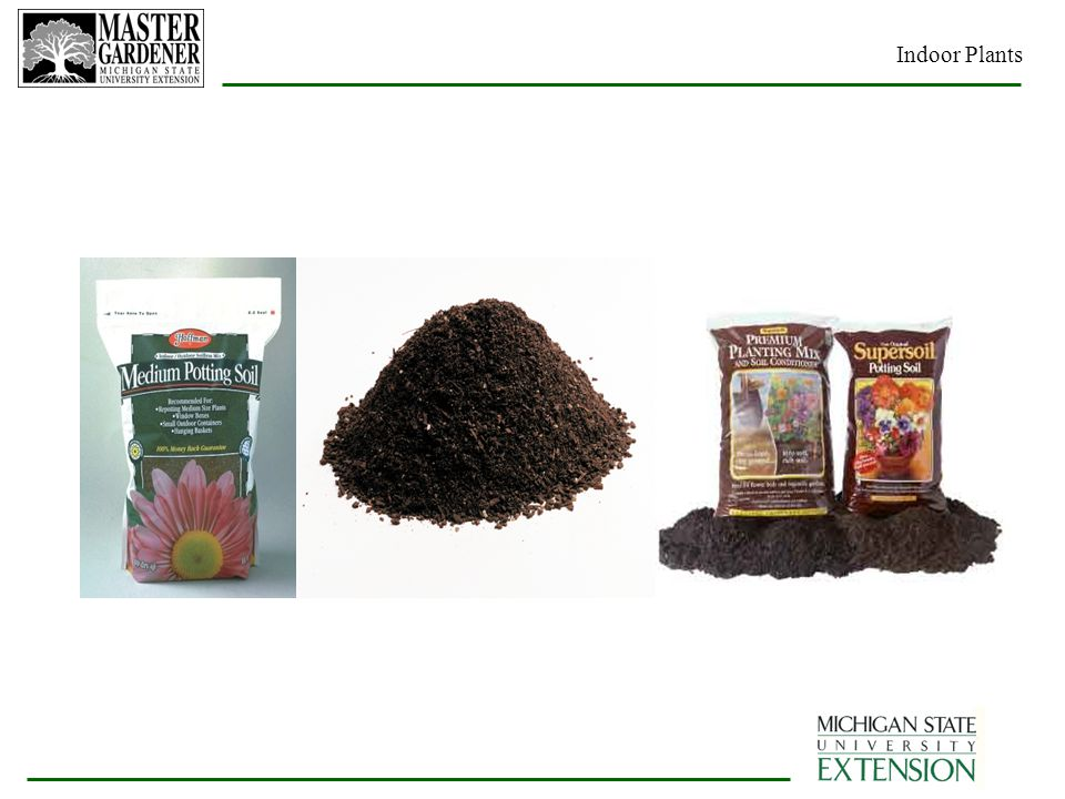 How To Identify A Houseplant together with post moreover 5667175 further Phalaenopsis Orchid Potting Mix also Seed Cutting  post 10l Bag. on growing orchids in vermiculite