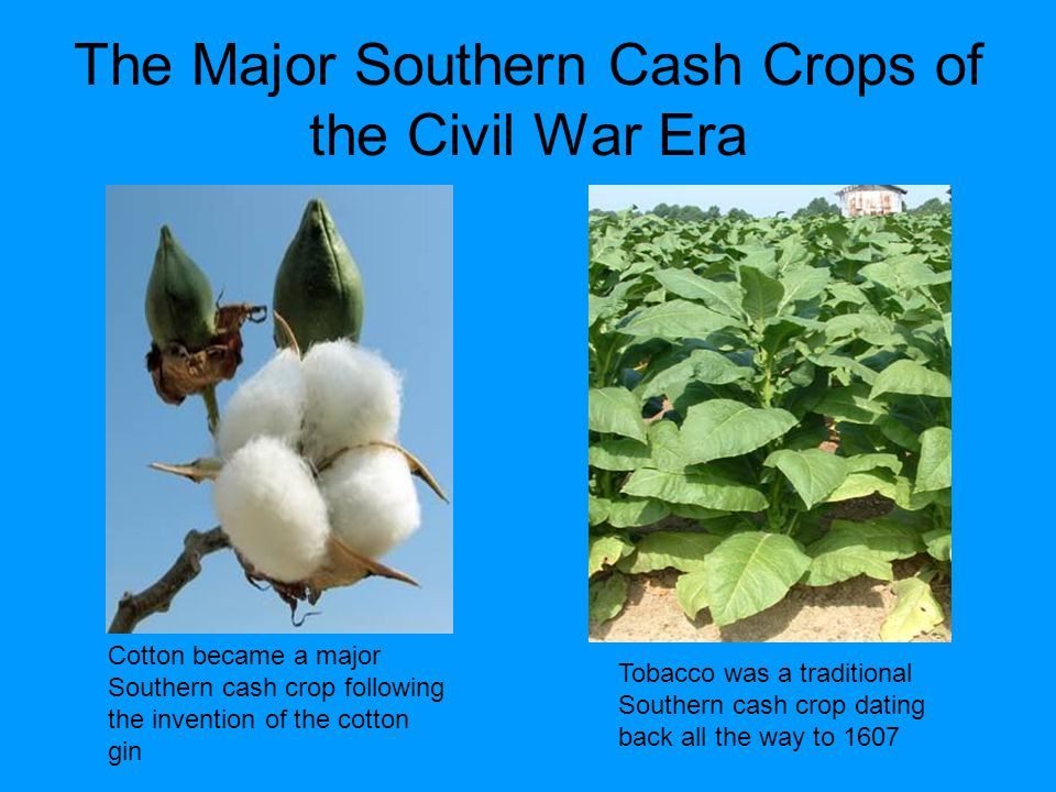 The Major Southern Cash Crops of the Civil War Era