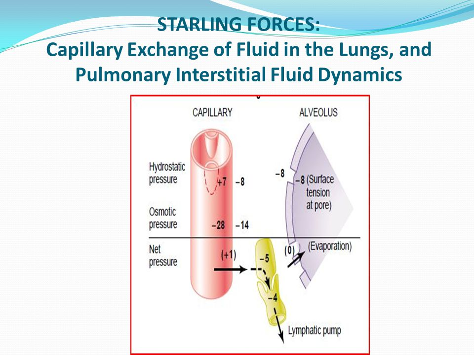 STARLING FORCES: Capillary Exchange of Fluid in the Lungs, and Pulmonary Interstitial Fluid Dynamics