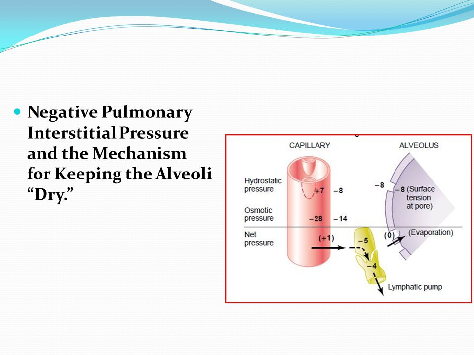 Negative Pulmonary Interstitial Pressure and the Mechanism for Keeping the Alveoli Dry.