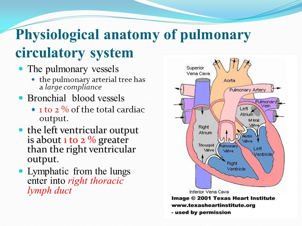 Physiological anatomy of pulmonary circulatory system