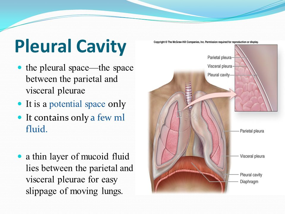 Pleural Cavity the pleural space—the space between the parietal and visceral pleurae. It is a potential space only.