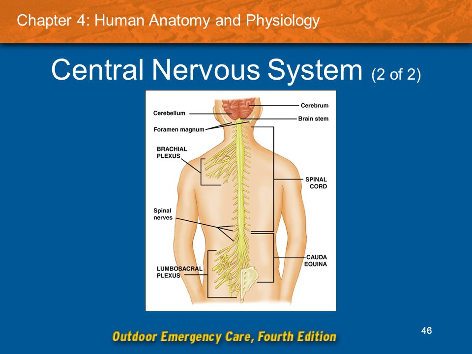 Charmant Cauda Equina Anatomy And Physiology Bilder - Menschliche ...