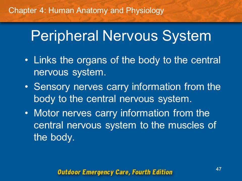 Großartig Anatomy And Physiology Links Ideen - Menschliche Anatomie ...