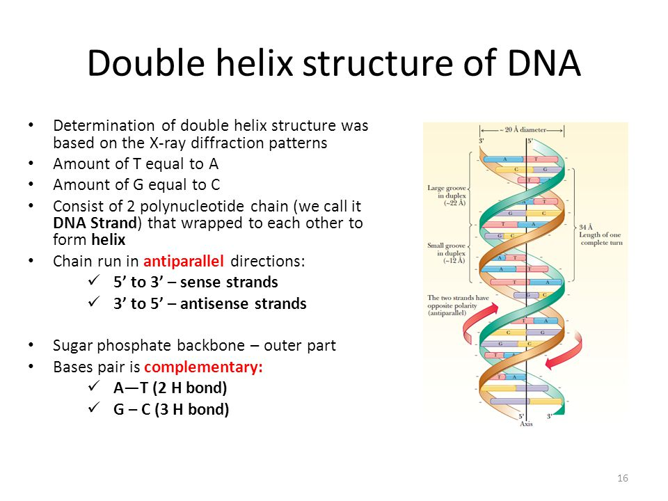 dna structure chains However, unlike a b-z junction, in this structure the bases are not fully  side  chains involved in interactions with dna are drawn as sticks and labeled most of .