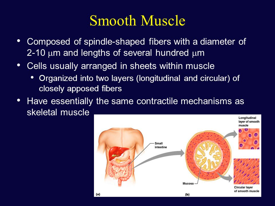 3 types of muscle tissue skeletal muscle tissue - ppt download, Muscles