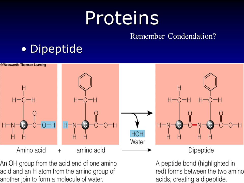 Protein Amino Acids Chapter 6 Ppt Video Online Download