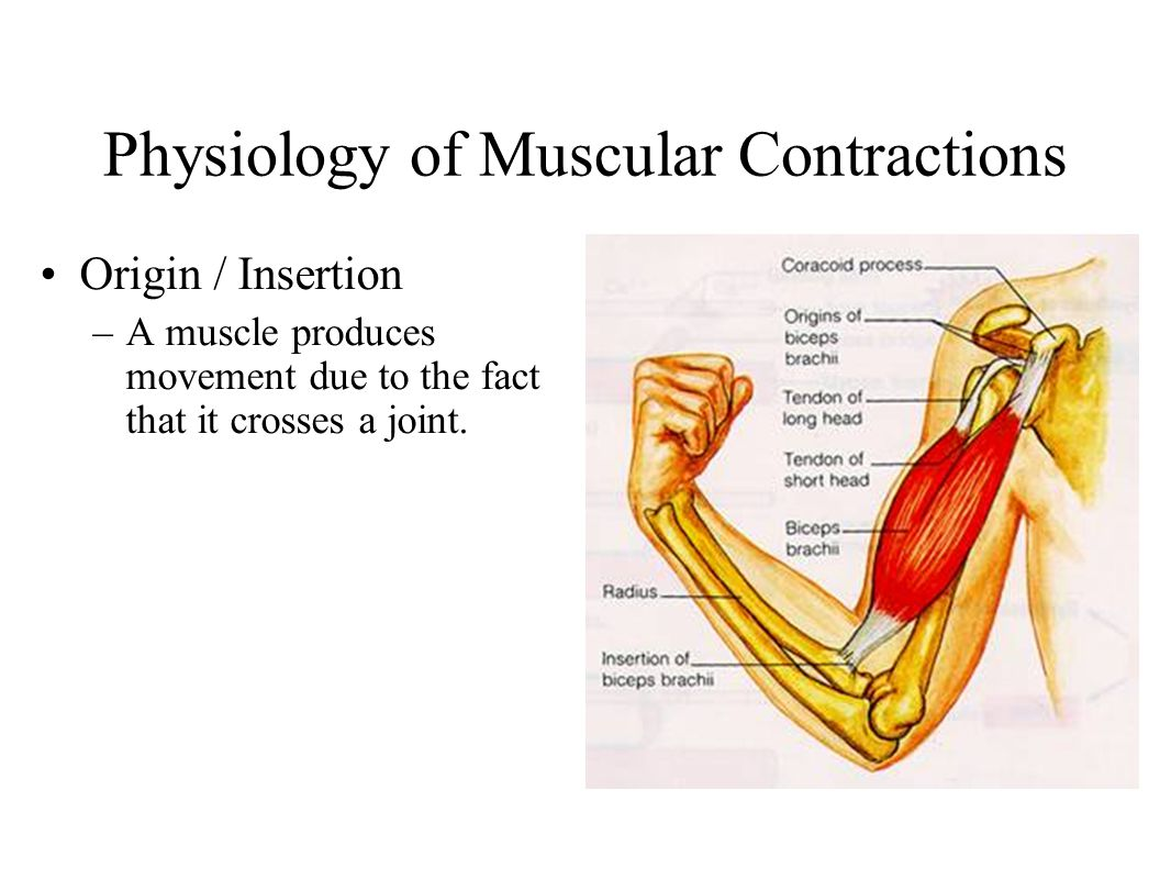 Sports Nutrition for Building Muscle - ppt download