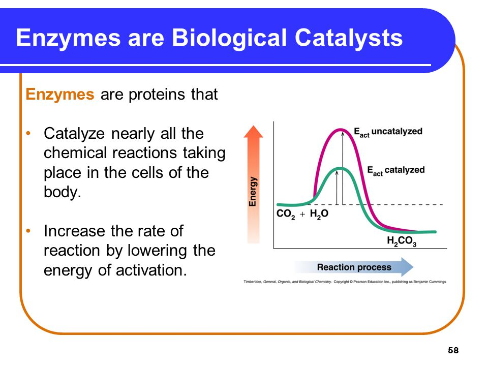 enzyme kinetics lab report reaction rate enzyme amylase st Enzyme kinetics is the study of the rates of chemical reactions that are catalysed by enzymes this rate-determining step may be a chemical reaction or a conformational change of the enzyme or substrates, such as those involved in the release of product(s) from the enzyme.