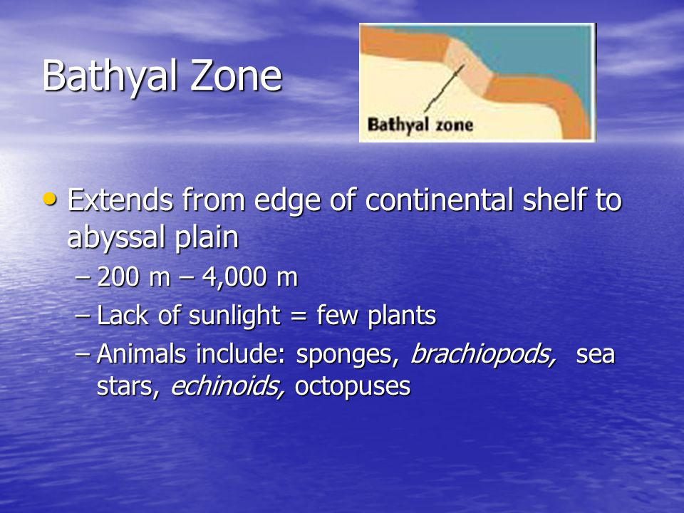 Bathyal Zone Extends from edge of continental shelf to abyssal plain