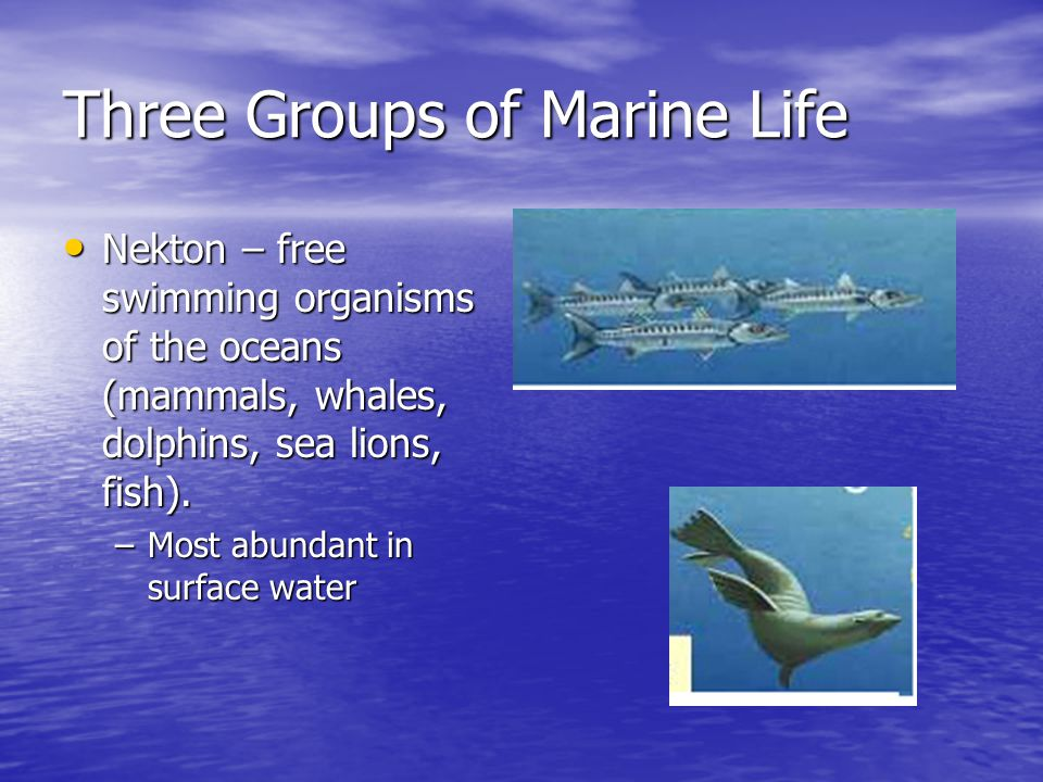 Three Groups of Marine Life
