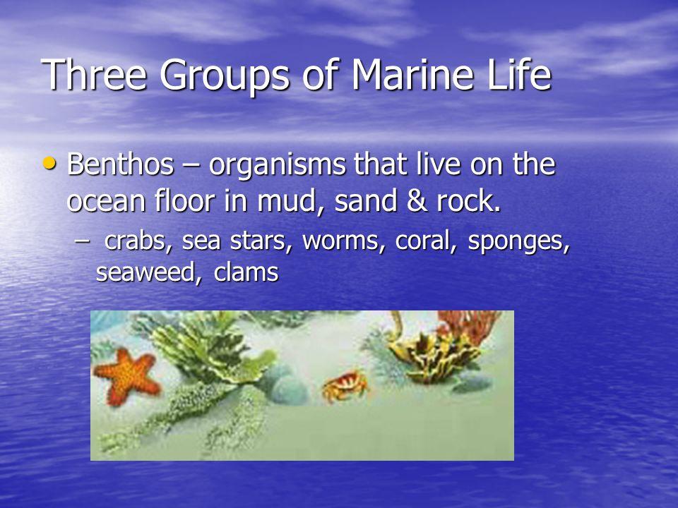 Three Groups of Marine Life