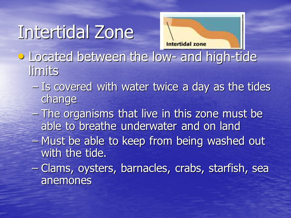 Intertidal Zone Located between the low- and high-tide limits