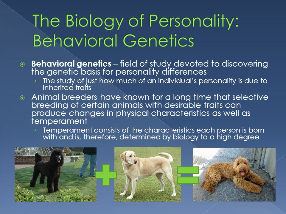 genetic and biological foundations of personality The roots of mental illness  including genetic, biological and environmental factors of course, that's true for many chronic diseases, heart disease and diabetes .