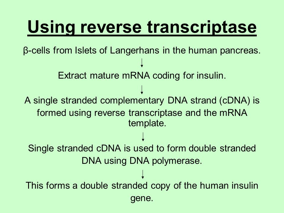 DNA and Gene Cloning DNA revision Gene cloning - ppt video online ...