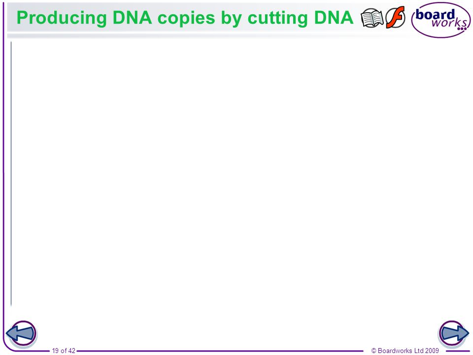 Producing DNA copies by cutting DNA