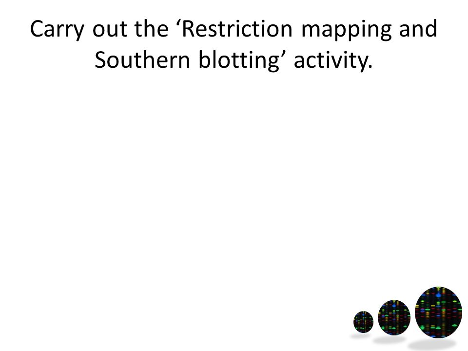 Carry out the 'Restriction mapping and Southern blotting' activity.
