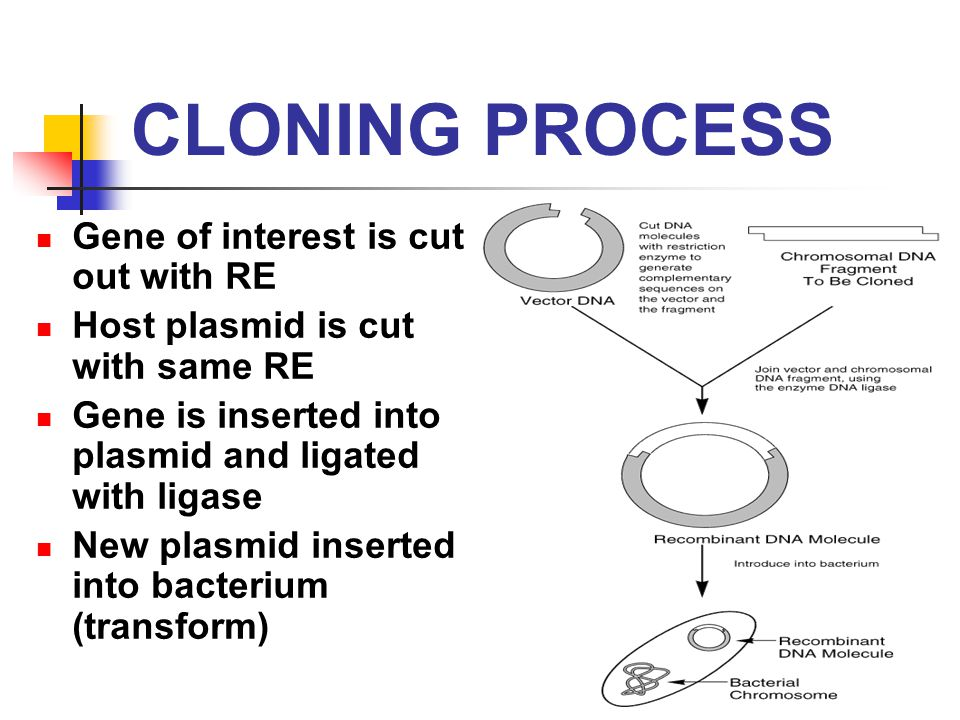 an analysis of cloning as a life dilemma The concept of self, and the meaning of life the views of the world's great religions on human cloning can have a profound impact on whether nations such as the.
