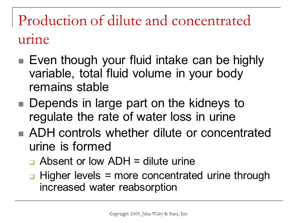 does adh favor the formation of dilute or concentrated urine Process the filtrate into urine: glomerular filtration, tubular reabsorption, and   adh is present the conditions favor the formation of the most concentrated urine .