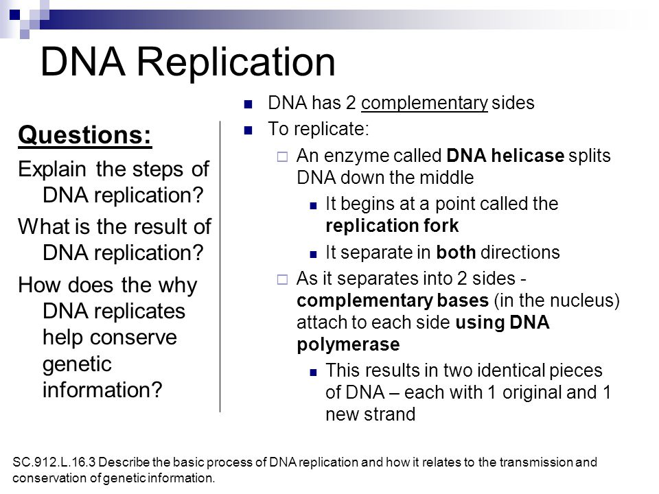 dna replication essay questions Title of essay dna replication essay questions dissertation dedication to my family essay on my life without electricity.