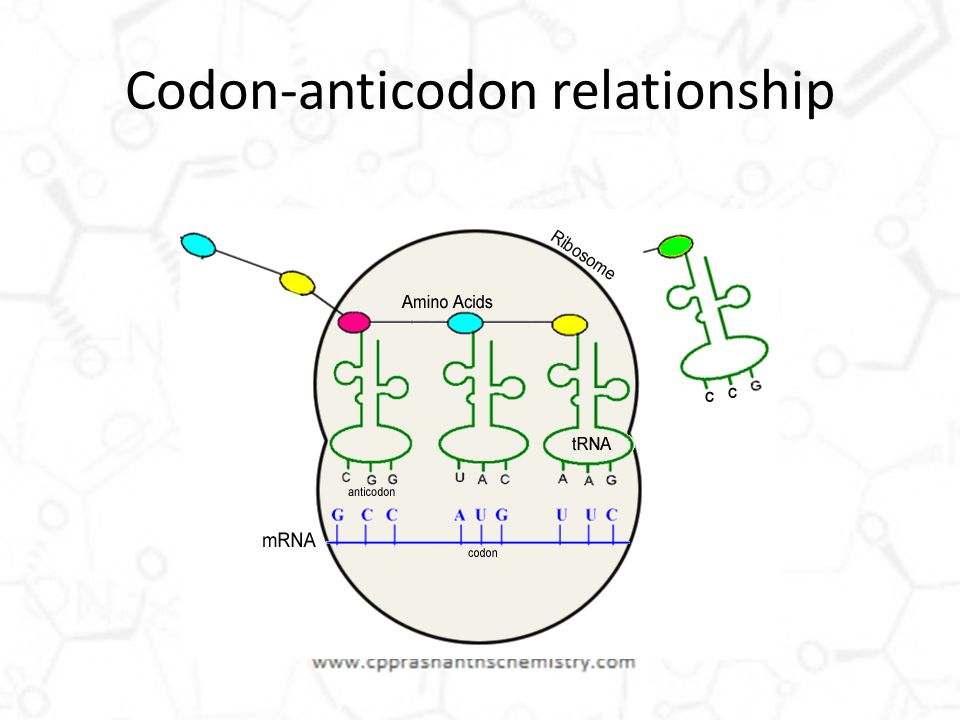 anticodon and codon relationship poems