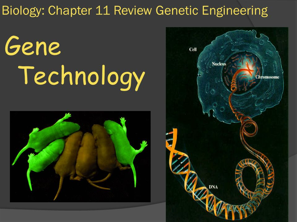 chapter 11 bio review Andrew eguia dr harjani medical biology p5 2/14/12 chapter 11 review p216 1 dna consists of subunits called nucleotides each subunit consists of three parts: sugar (deoxyribose), phosphate, and base.