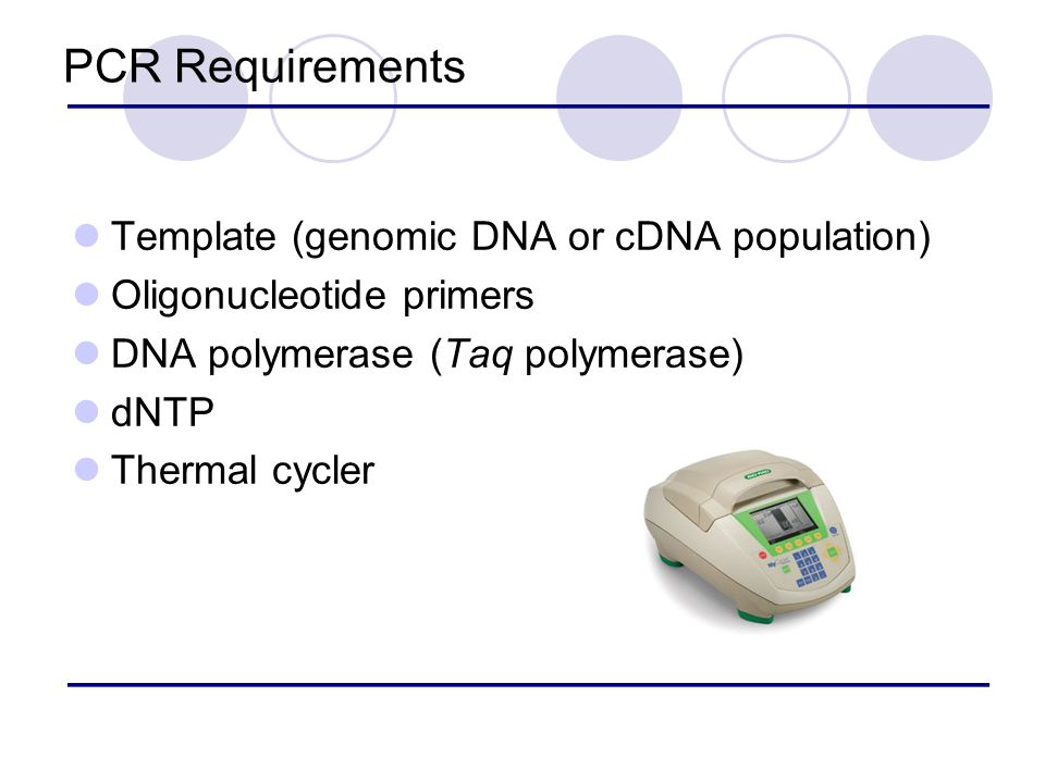 pcr template amount - biotechnology ppt video online download