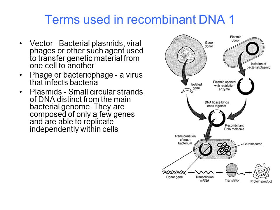 Terms used in recombinant DNA 1