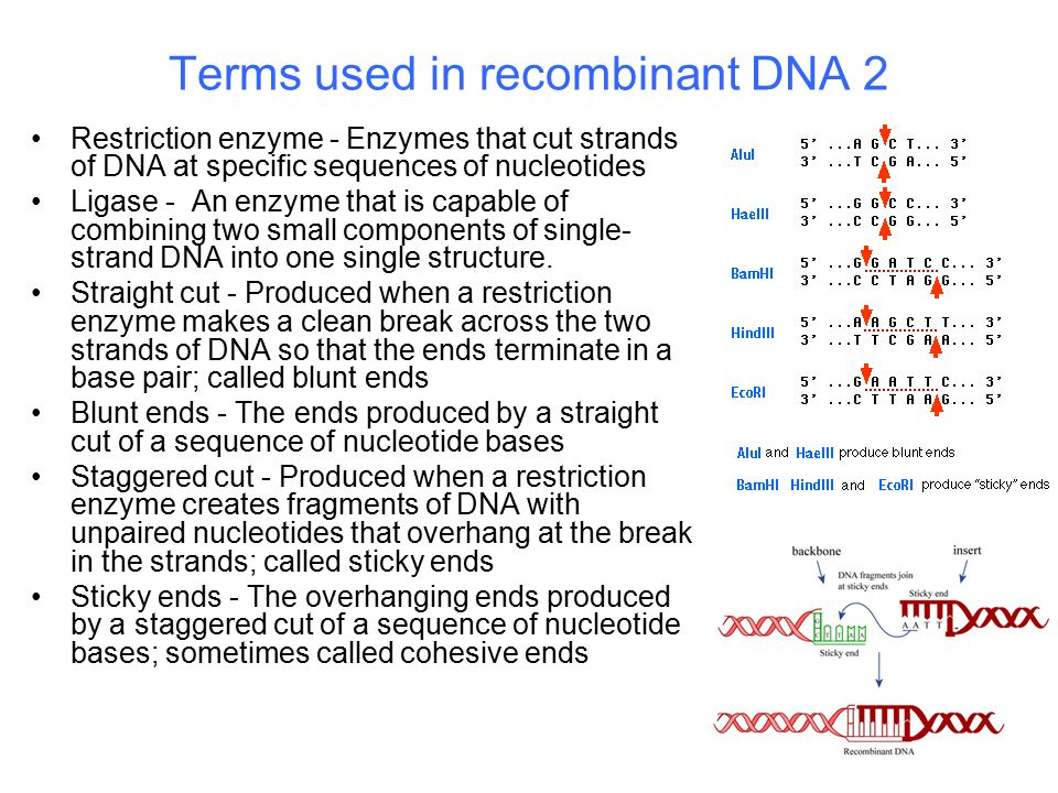 Terms used in recombinant DNA 2