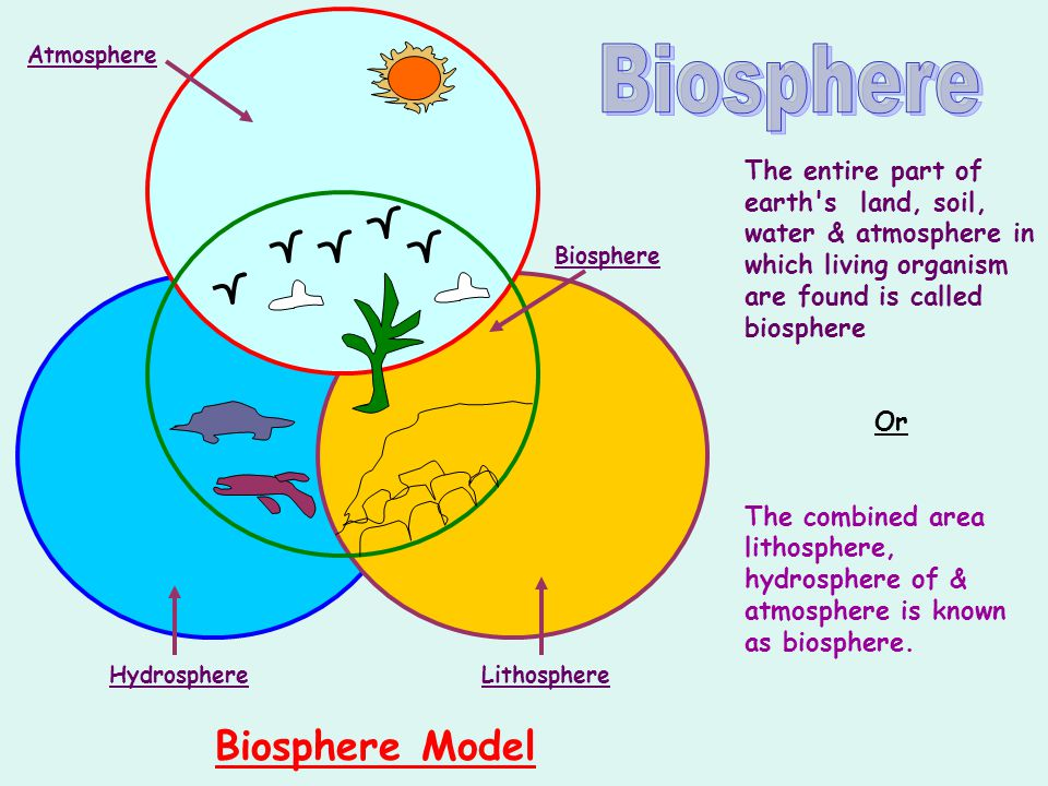 how to make biosphere model