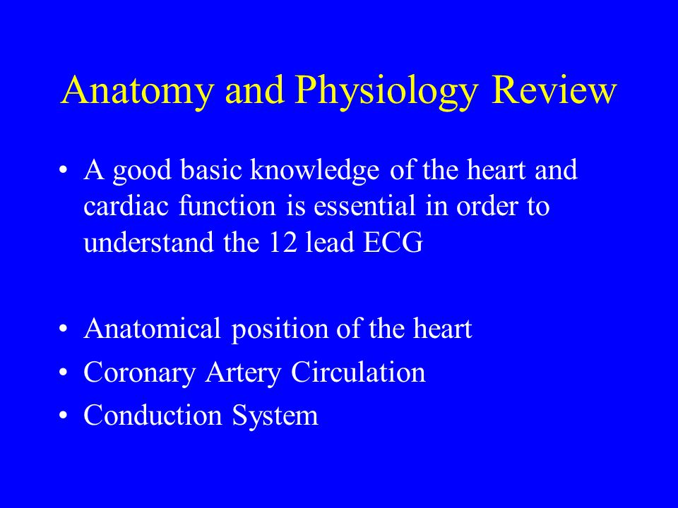 the basics of cardiac anatomy understanding how the heart functions as a whole Innerbodycom is a free virtual human anatomy website with detailed models of all human body systems the internet's best anatomy learning resource.