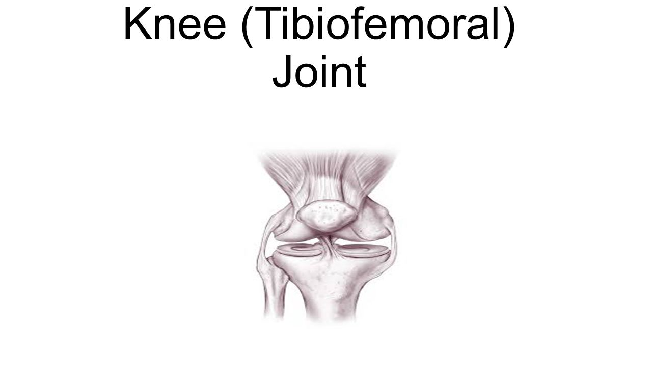 Knee Tibiofemoral Joint Ppt Video Online Download