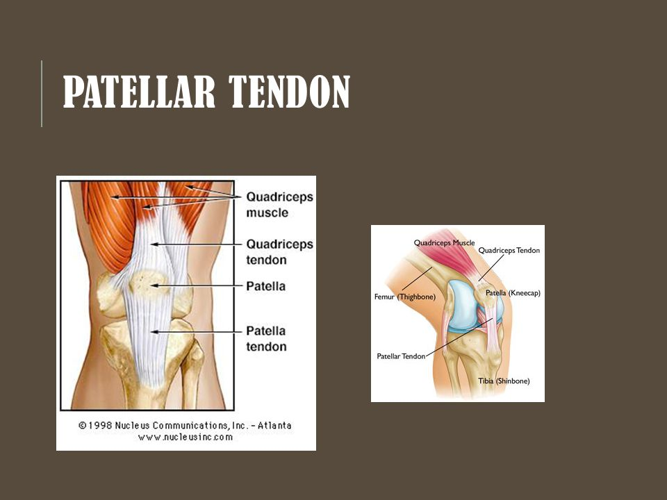 the knee chapter ppt video online download