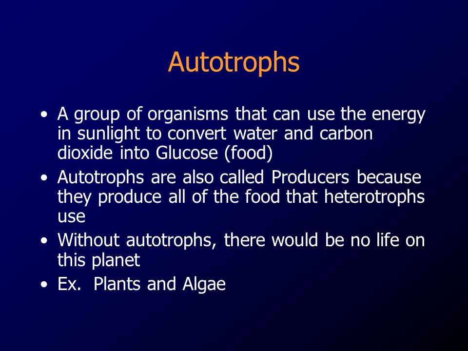 Autotrophs A group of organisms that can use the energy in sunlight to convert water and carbon dioxide into Glucose (food)