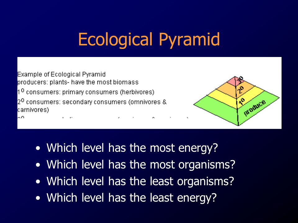 Ecological Pyramid Which level has the most energy
